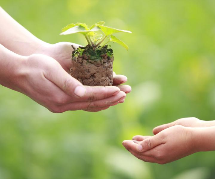 Hände mit Pflanze